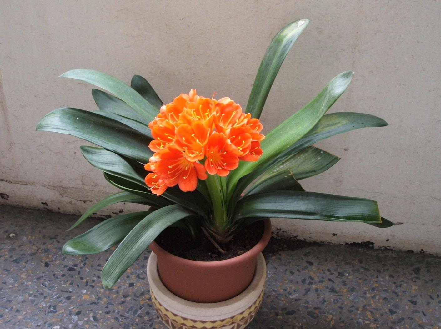 домашние цветы фото и названия - Сумки: http://sumke.ru/domashnie-tsvety-foto-i-nazvaniya.html